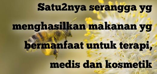 Fakta Unik Lebah Madu - Satu-satunya serangga yang menghasilkan makanan