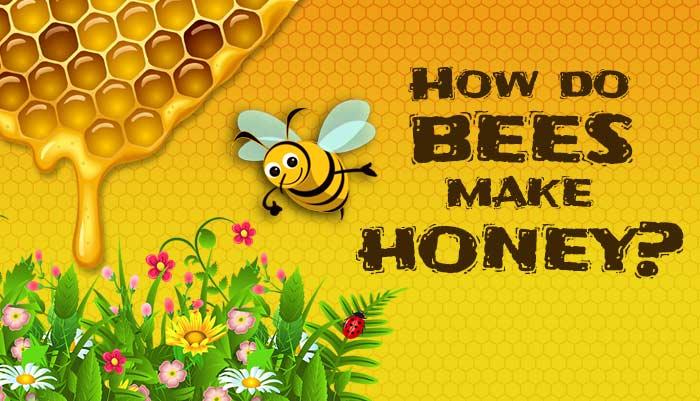Bagaimana madu dihasilkan