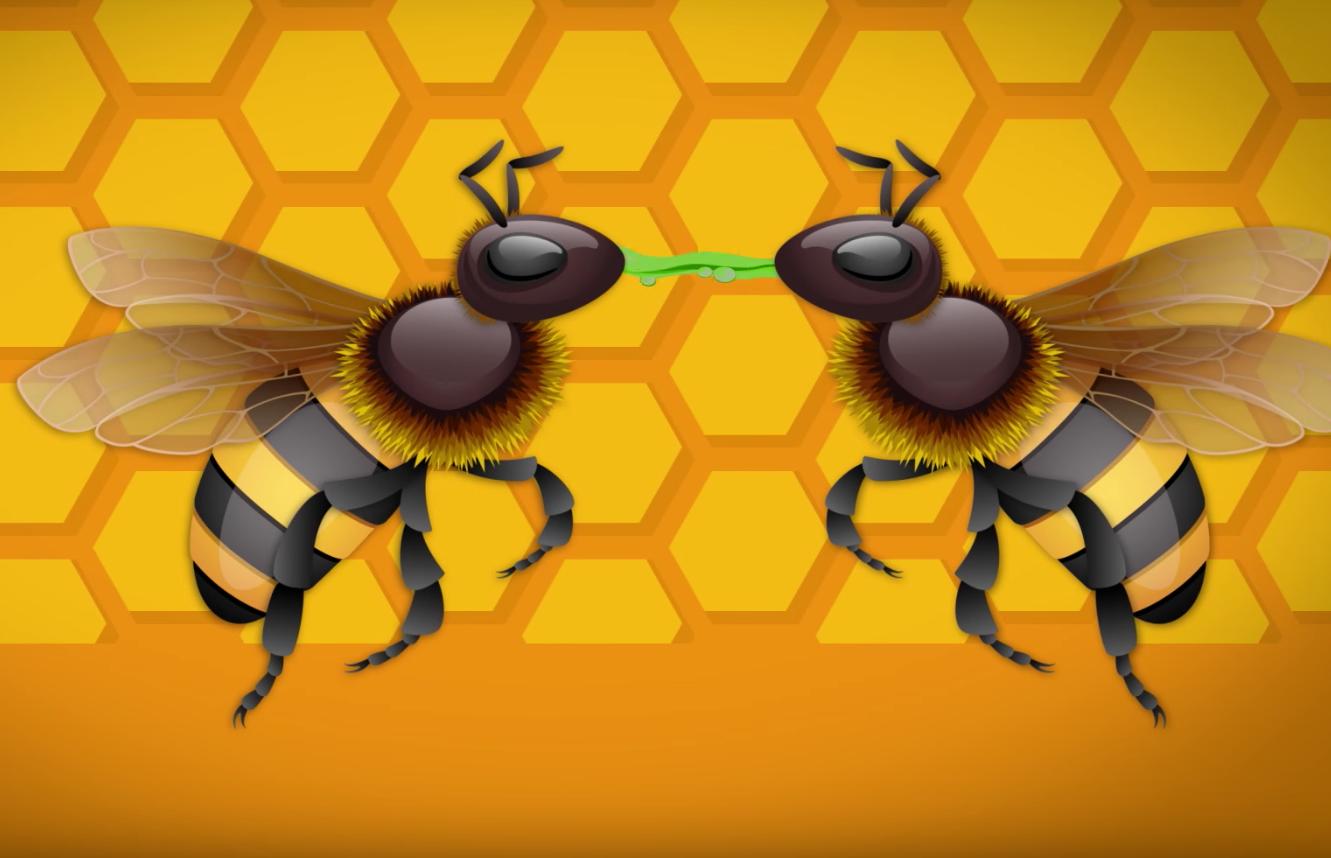 Lebah pekerja menghisap nektar dari lebah pencari nektar