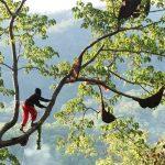Membedakan madu hutan asli