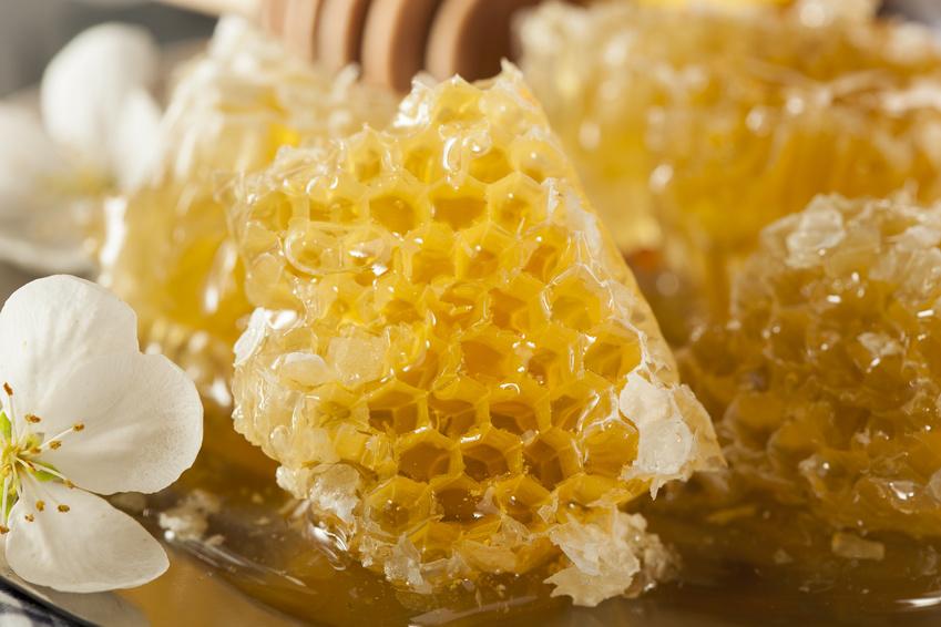 Madu mentah lebah ternak