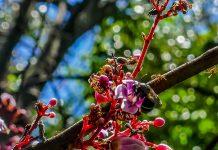 Sumber Pakan Terbaik Lebah Trigona Klanceng