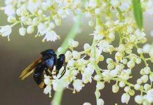 persiapan lahan Vegetasi Budidaya Lebah Trigona Klanceng