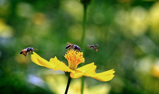 Hasil gambar untuk Pakan dan Makanan lebah trigona