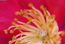 Kandungan dan manfaat nektar bagi lebah