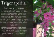 Sukses Merawat Trigona Klanceng - Persiapan Vegetasi Terbaik